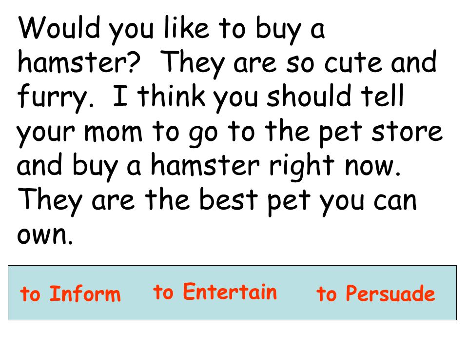 Would you like to buy a hamster. They are so cute and furry