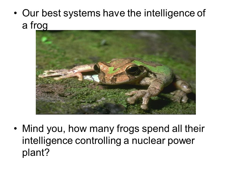 Our best systems have the intelligence of a frog