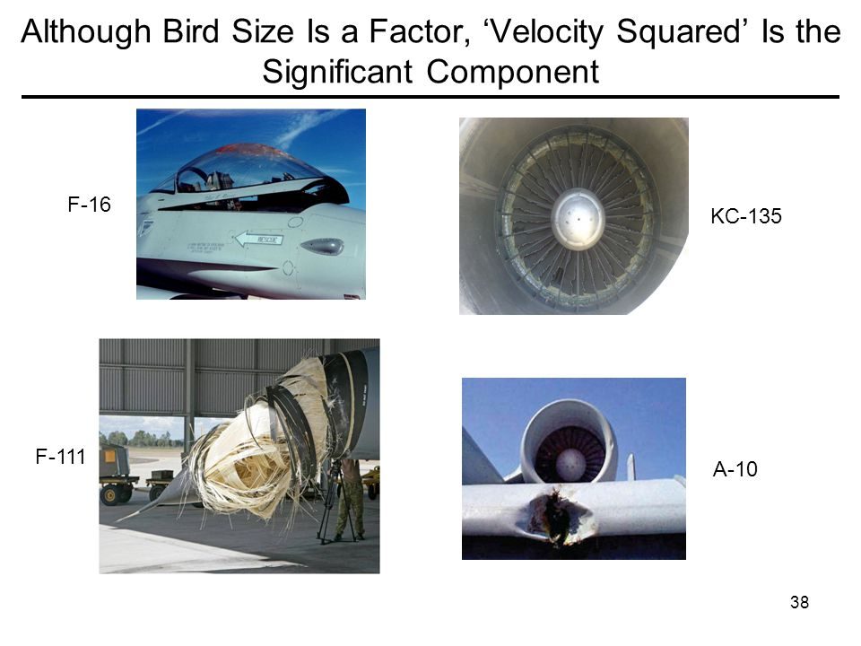 Although Bird Size Is a Factor, 'Velocity Squared' Is the Significant Component
