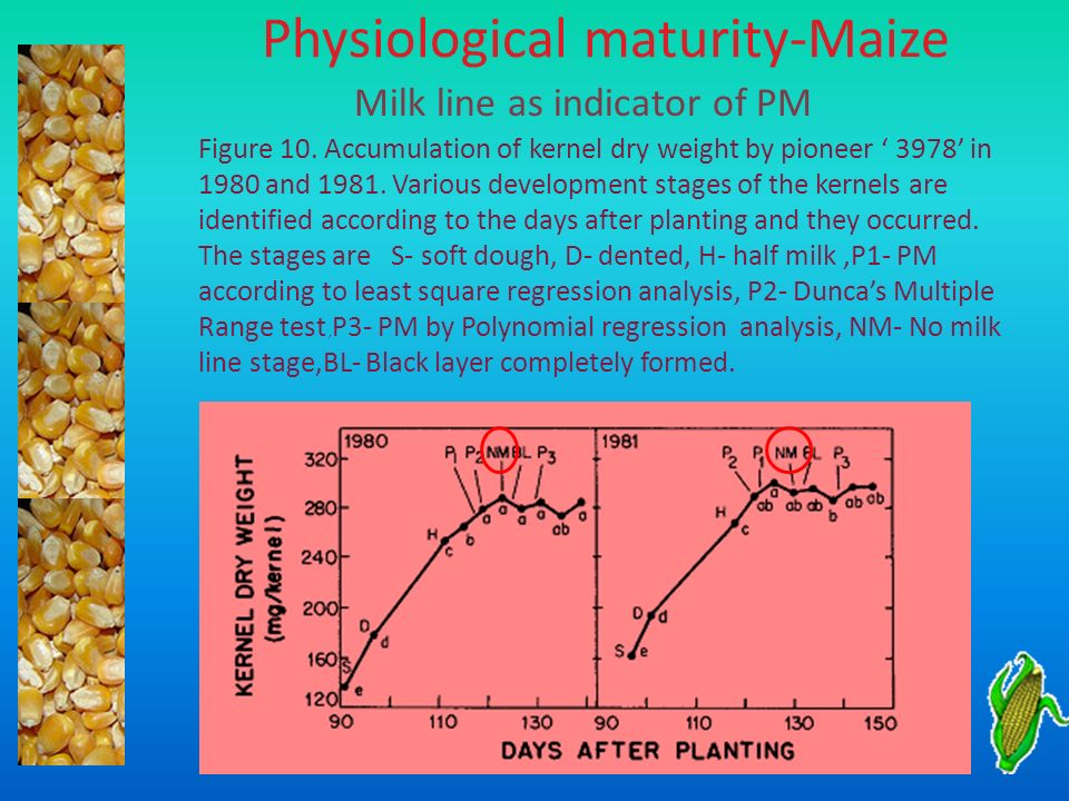Physiological maturity-Maize