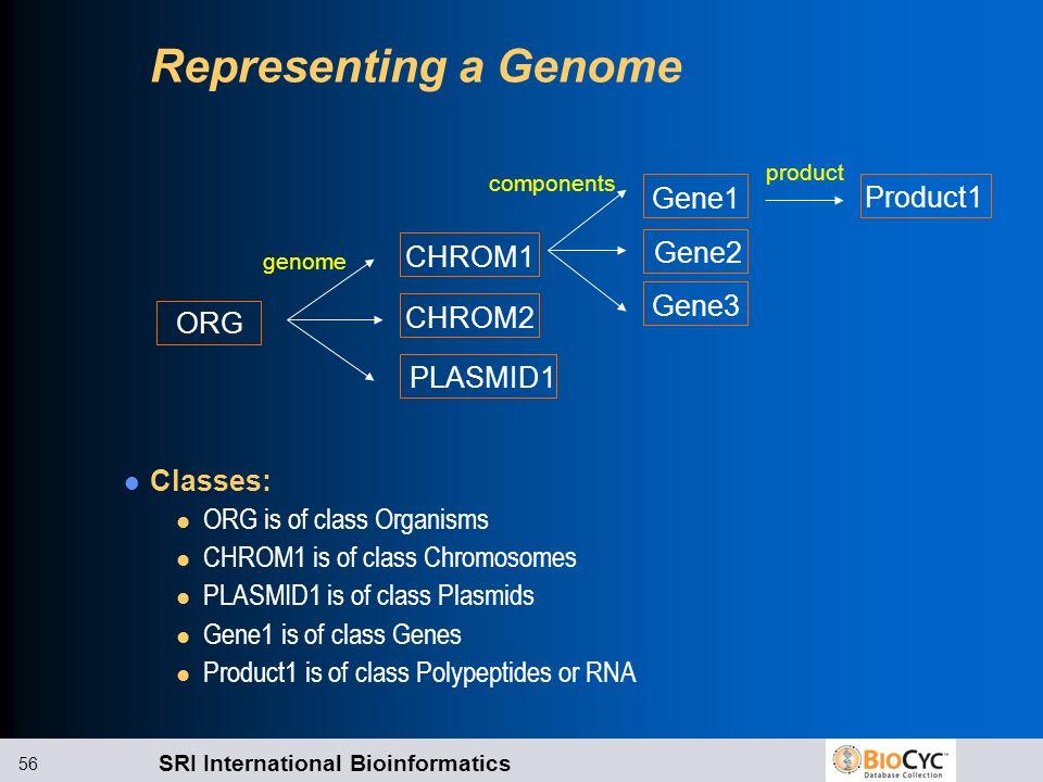 Representing a Genome Gene1 Product1 Gene2 CHROM1 Gene3 CHROM2 ORG