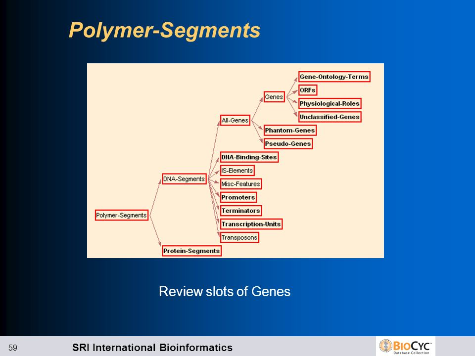 Polymer-Segments Review slots of Genes