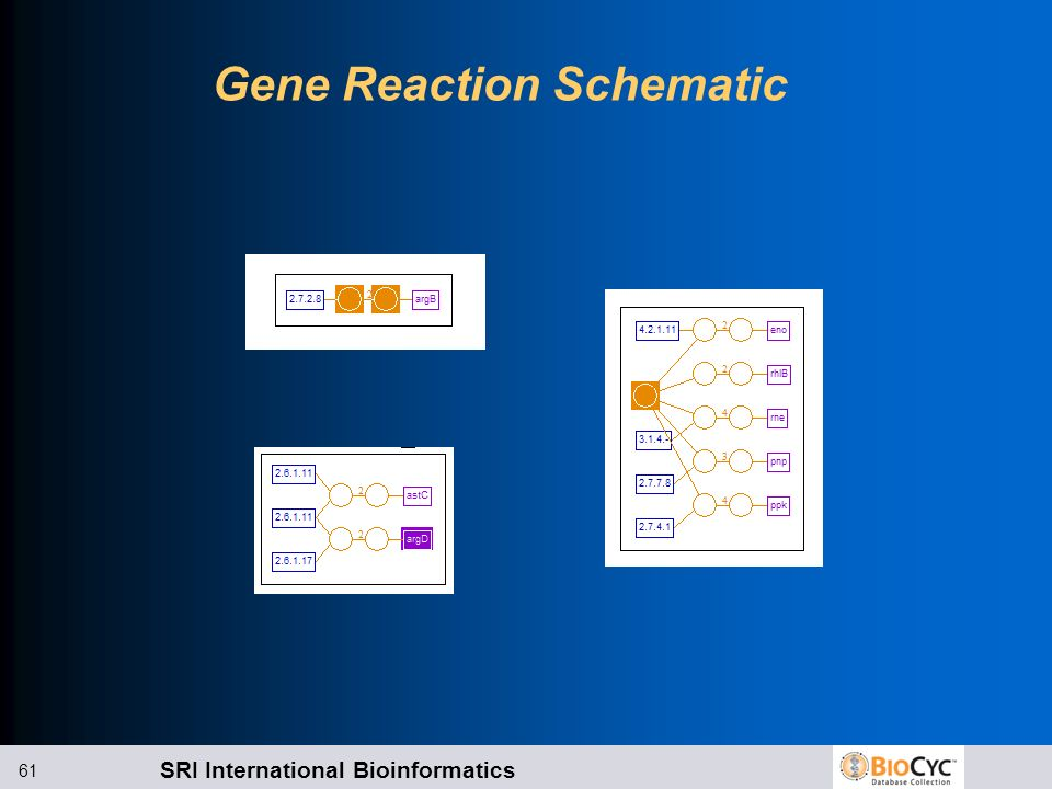 Gene Reaction Schematic