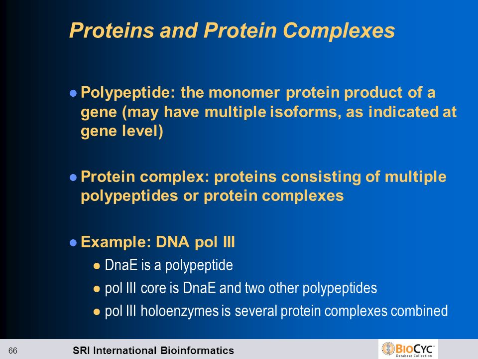Proteins and Protein Complexes