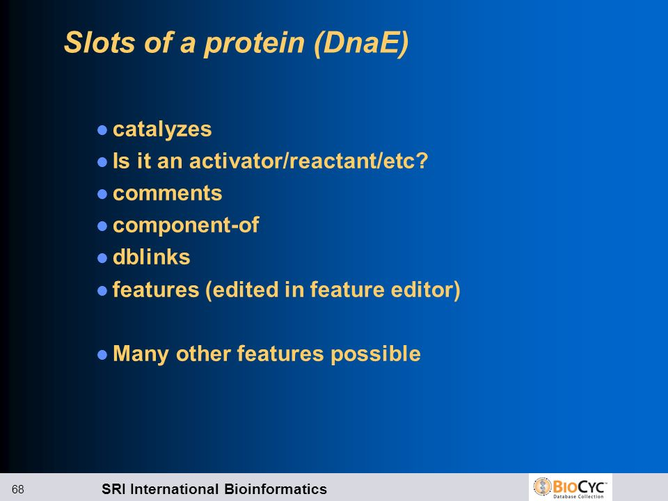 Slots of a protein (DnaE)