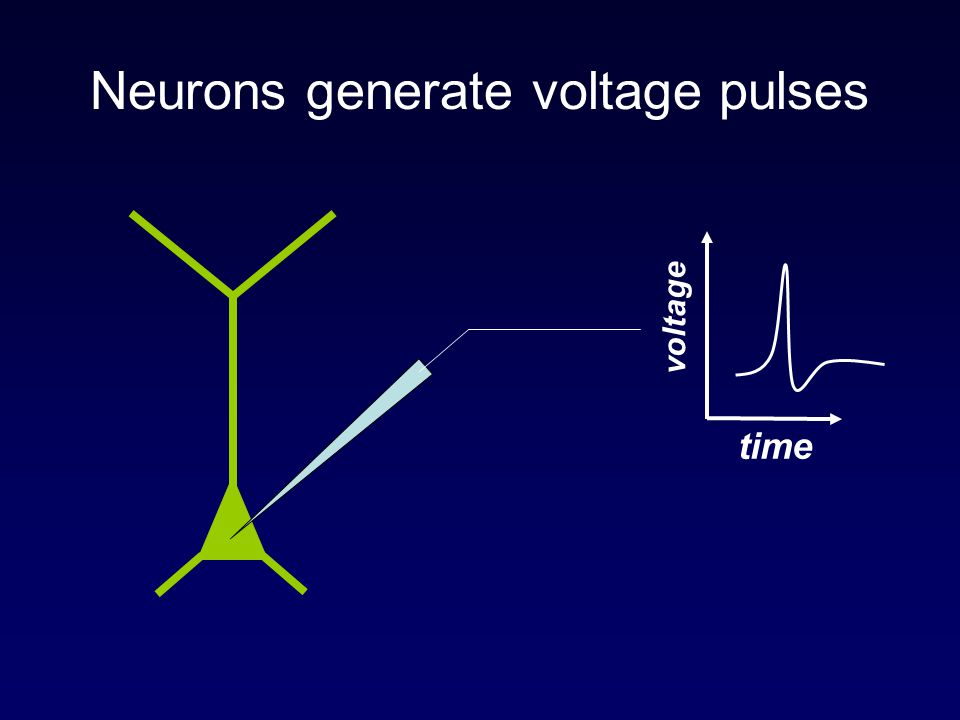Neurons generate voltage pulses