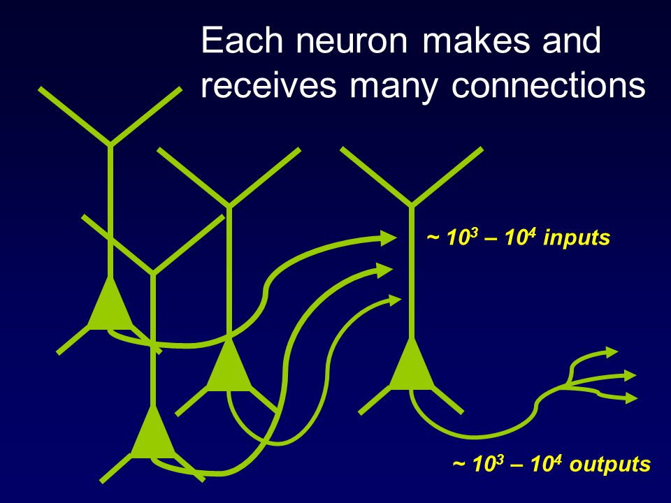 Each neuron makes and receives many connections
