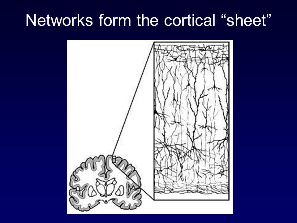 Networks form the cortical sheet