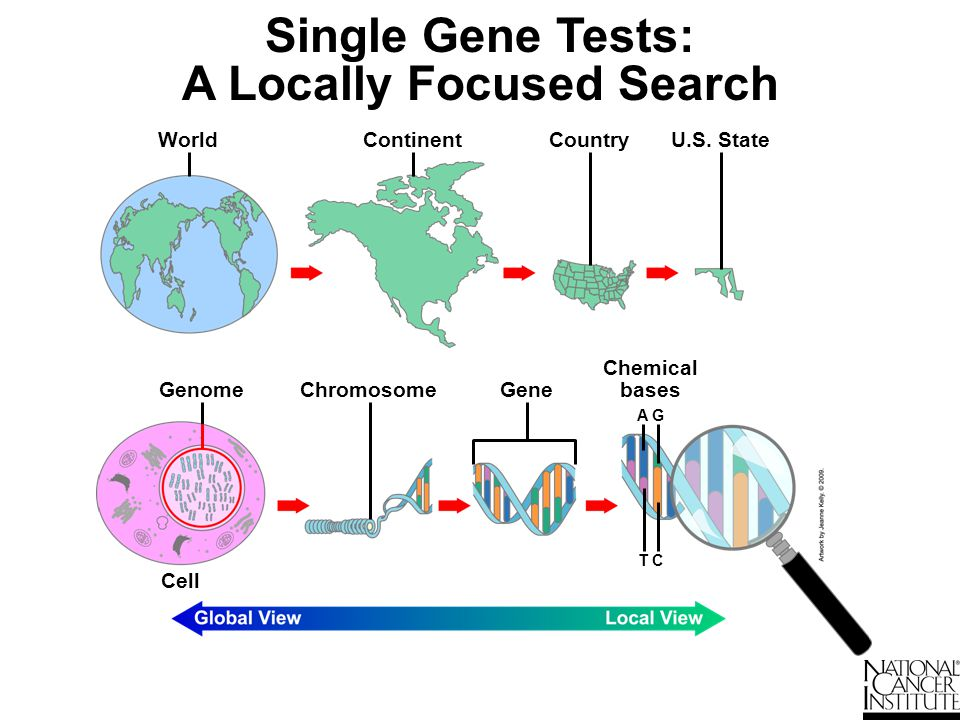 Single Gene Tests: A Locally Focused Search