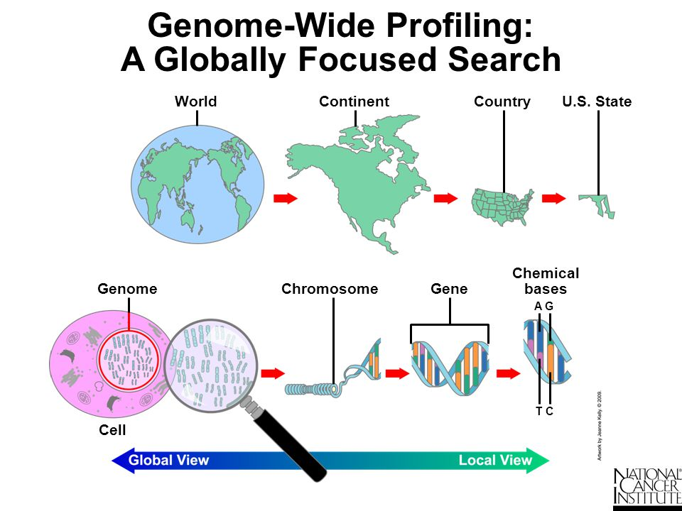 Genome-Wide Profiling: A Globally Focused Search