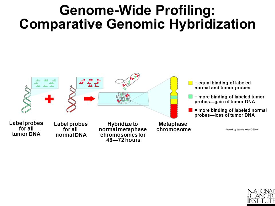 Genome-Wide Profiling: Comparative Genomic Hybridization