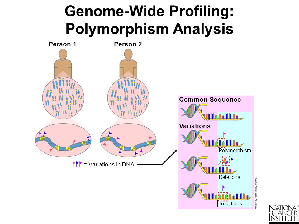 Genome-Wide Profiling: Polymorphism Analysis