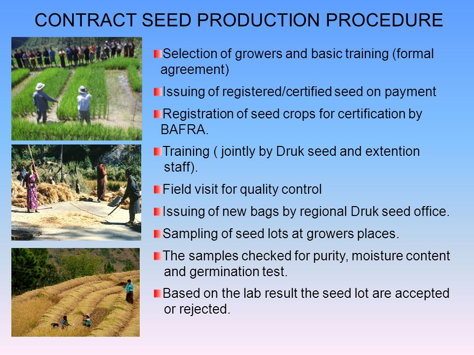 CONTRACT SEED PRODUCTION PROCEDURE