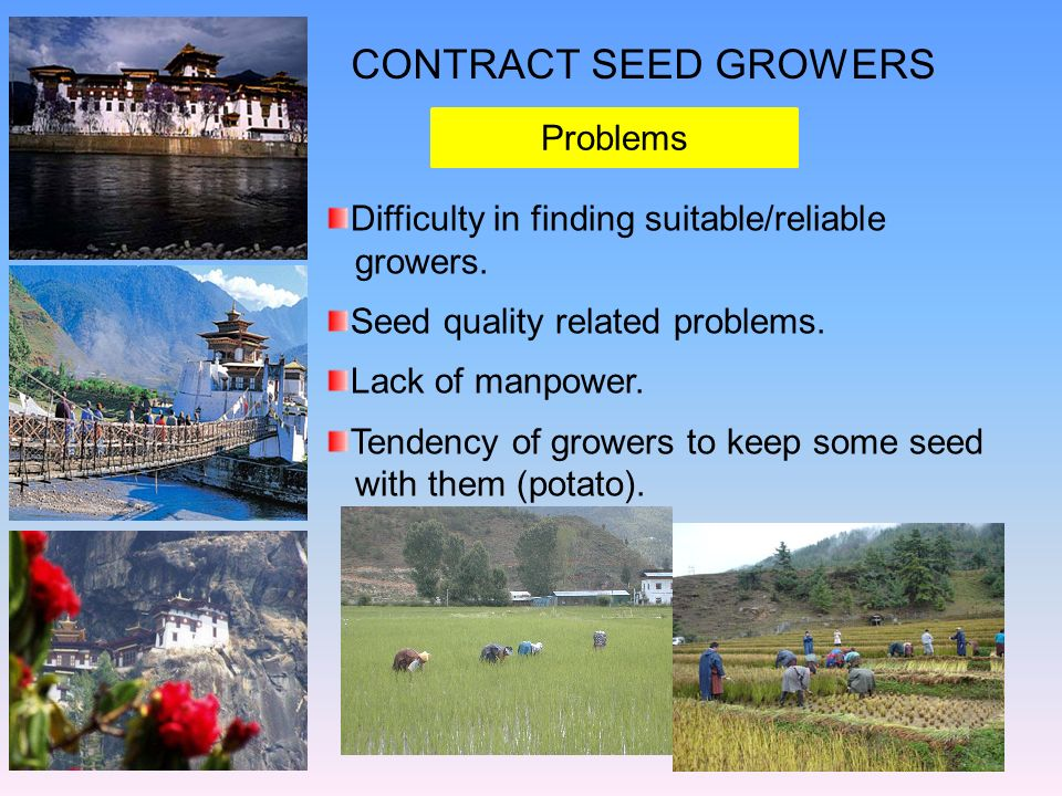 CONTRACT SEED GROWERS Problems Difficulty in finding suitable/reliable