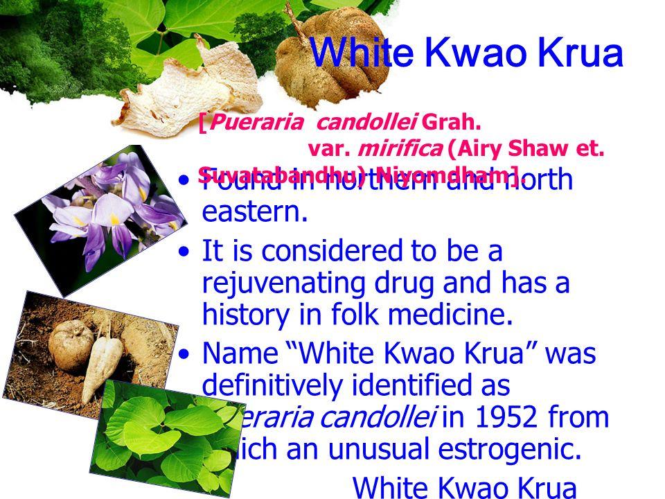 White Kwao Krua Found in northern and north eastern.