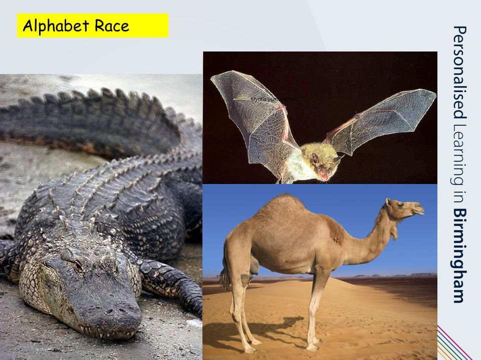 Alphabet Race Each pair – alliterative phrase to describe the animals – build into poem.