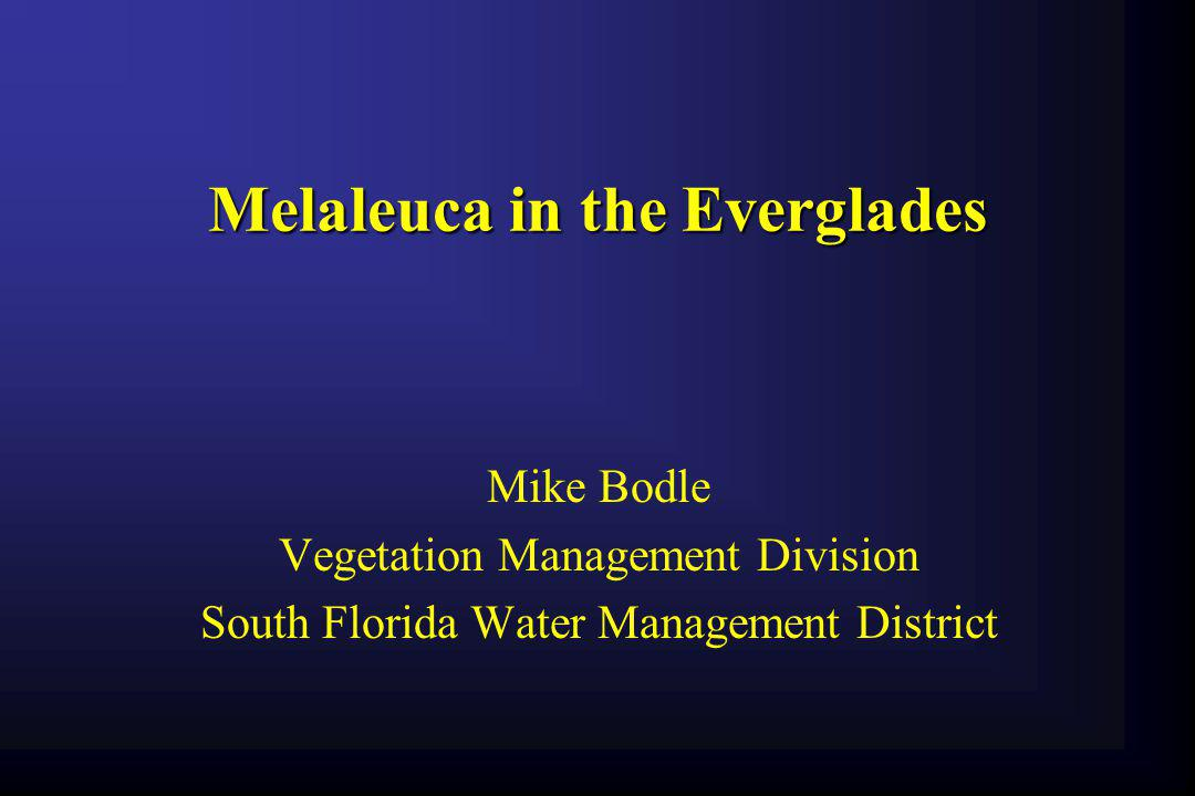 Melaleuca in the Everglades
