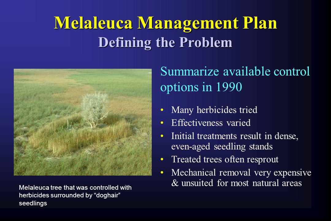 Melaleuca Management Plan Defining the Problem
