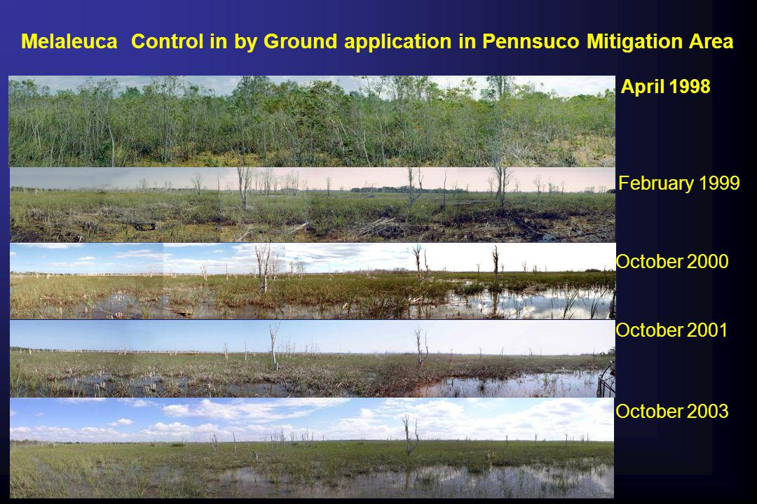 Melaleuca Control in by Ground application in Pennsuco Mitigation Area