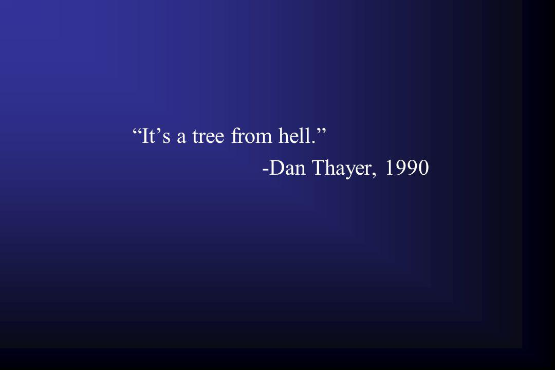 It's a tree from hell. -Dan Thayer, 1990