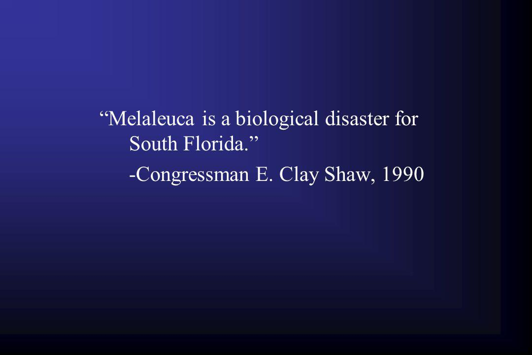 Melaleuca is a biological disaster for South Florida.