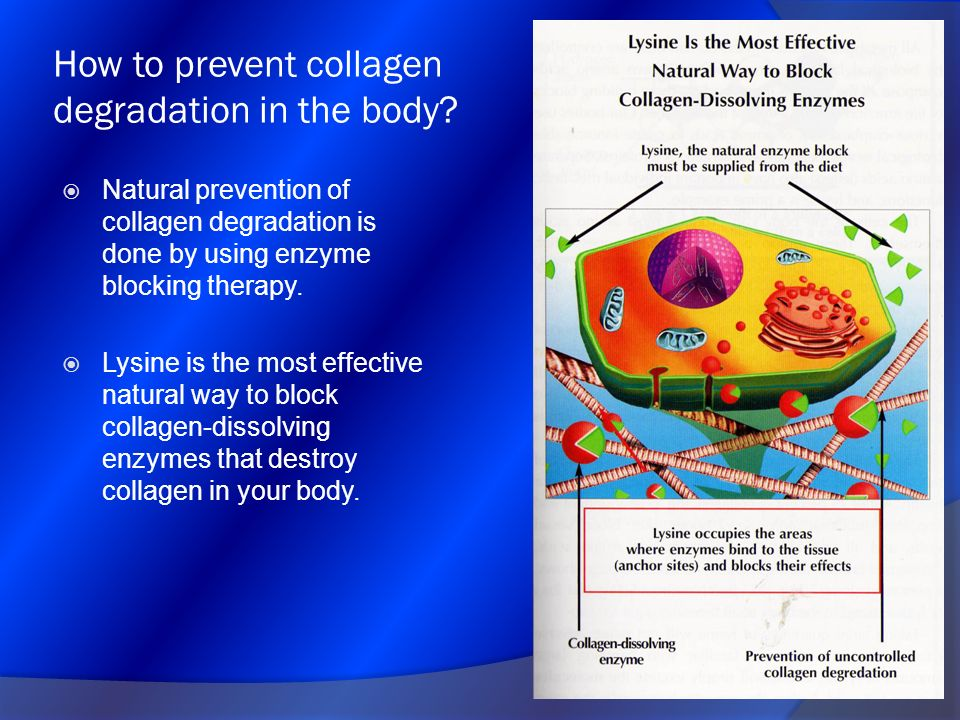 How to prevent collagen degradation in the body