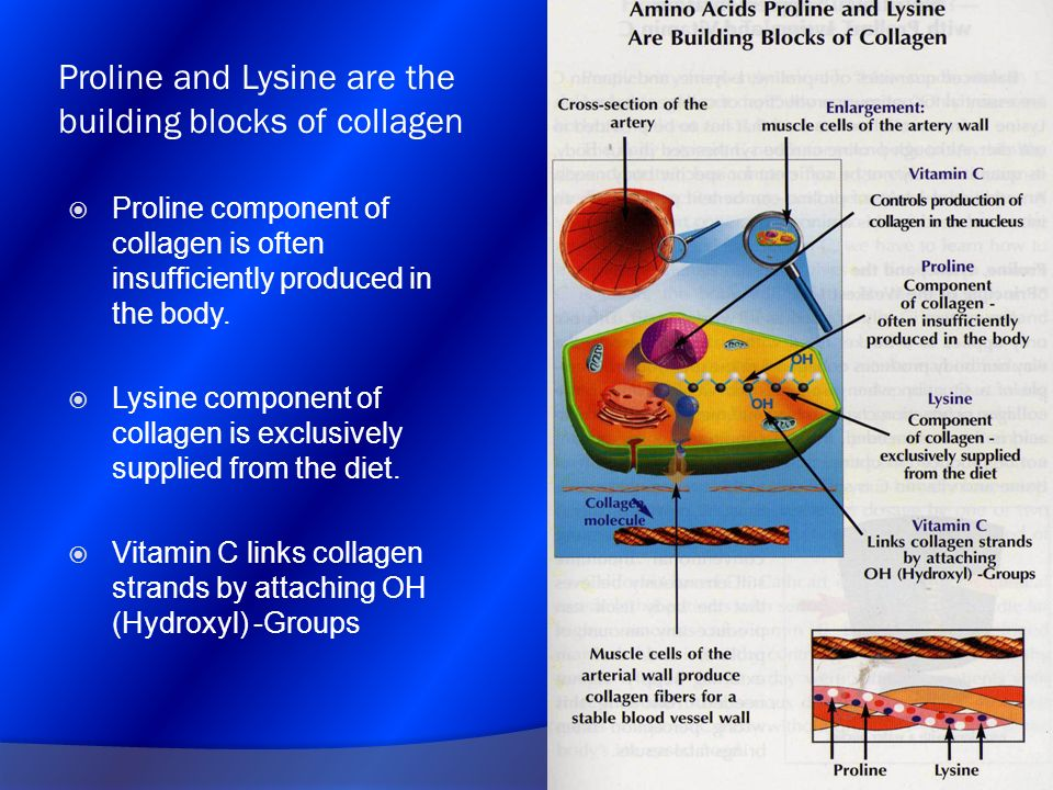 Proline and Lysine are the building blocks of collagen