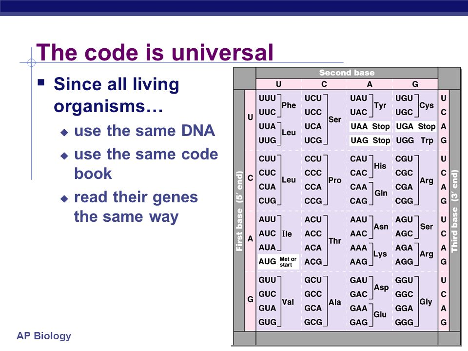 The code is universal Since all living organisms… use the same DNA