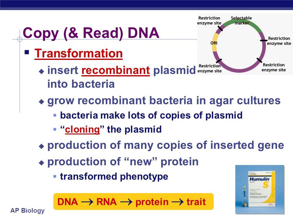 Copy (& Read) DNA Transformation
