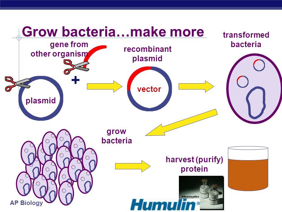 Grow bacteria…make more
