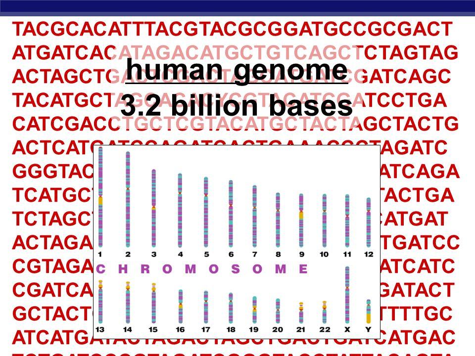 human genome 3.2 billion bases