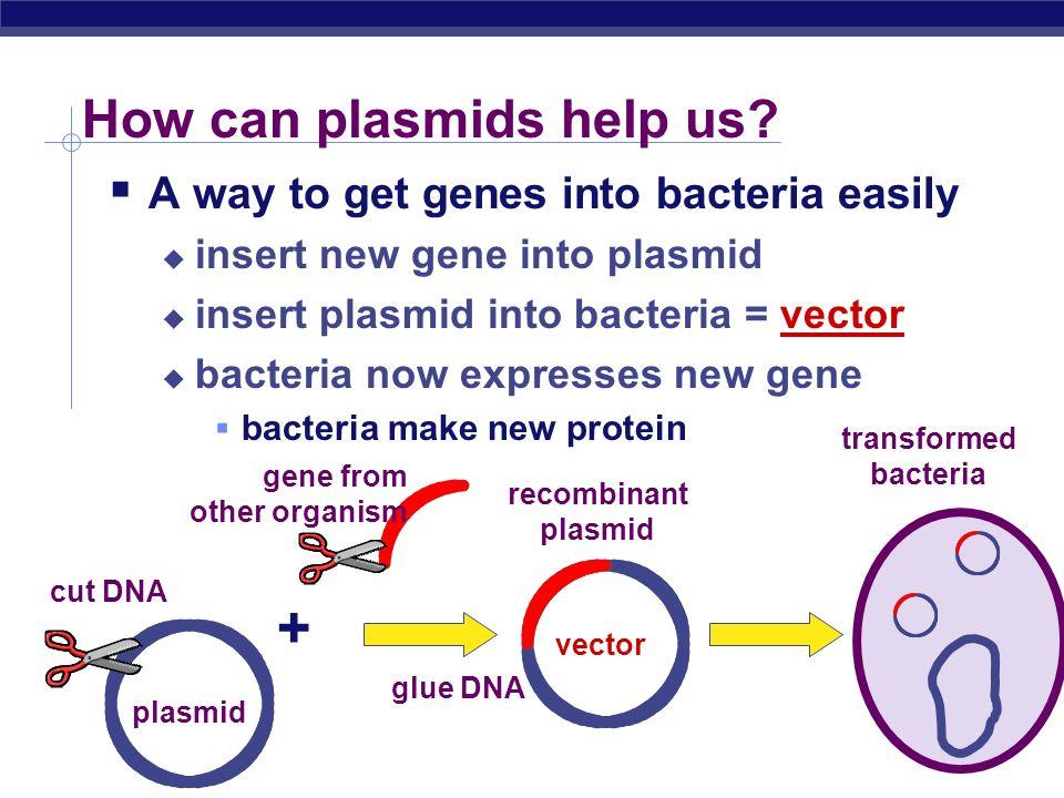 How can plasmids help us