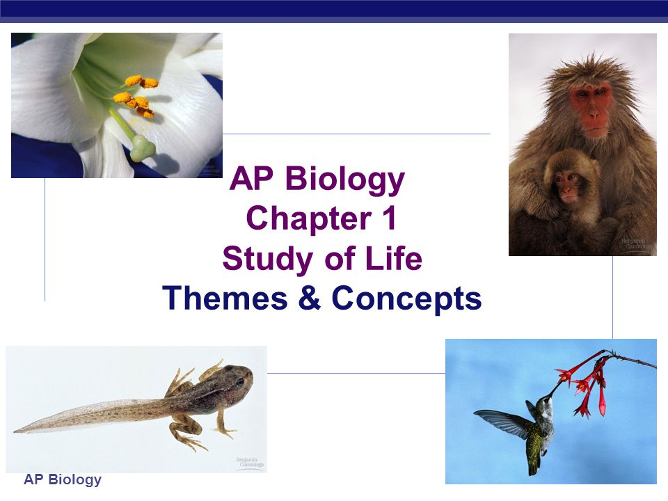 AP Biology Chapter 1 Study of Life Themes & Concepts