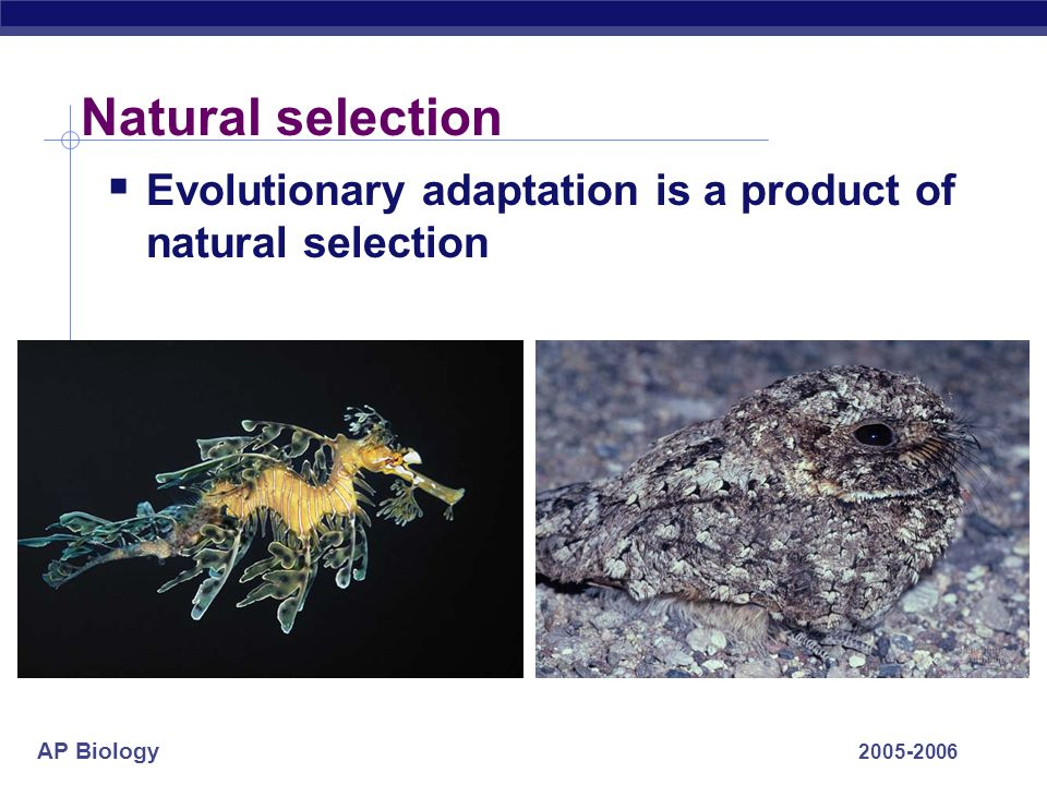 Natural selection Evolutionary adaptation is a product of natural selection 2005-2006
