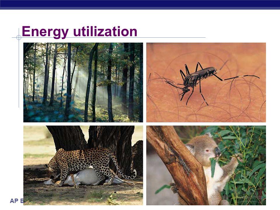 Energy utilization 2005-2006