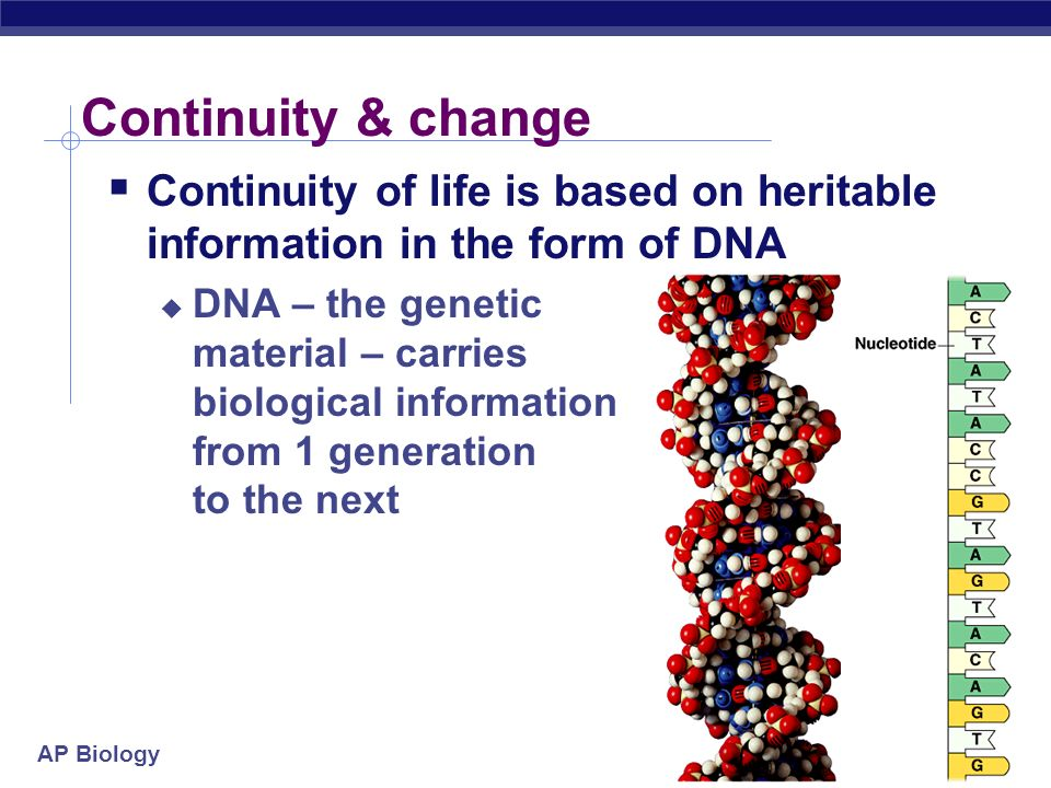 Continuity & change Continuity of life is based on heritable information in the form of DNA.