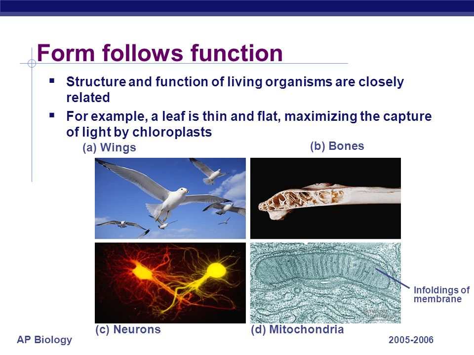 Form follows function Structure and function of living organisms are closely related.