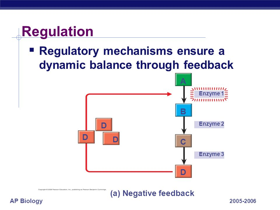 Regulation Regulatory mechanisms ensure a dynamic balance through feedback. A. Enzyme 1. B. D. Enzyme 2.