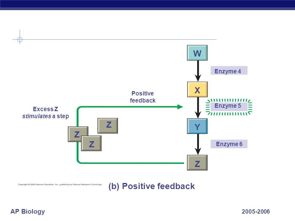 W X Z Y Z Z Z (b) Positive feedback