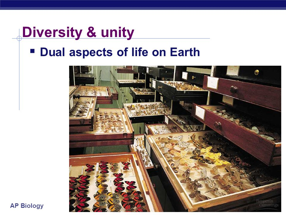 Diversity & unity Dual aspects of life on Earth 2005-2006