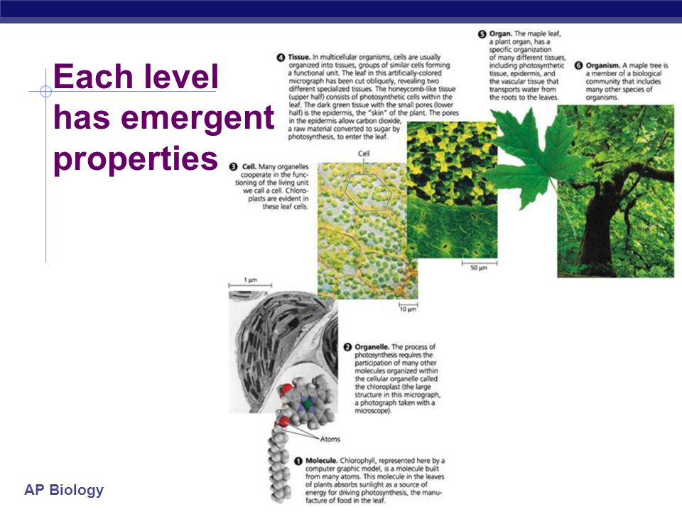 Each level has emergent properties