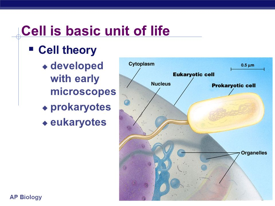 Cell is basic unit of life