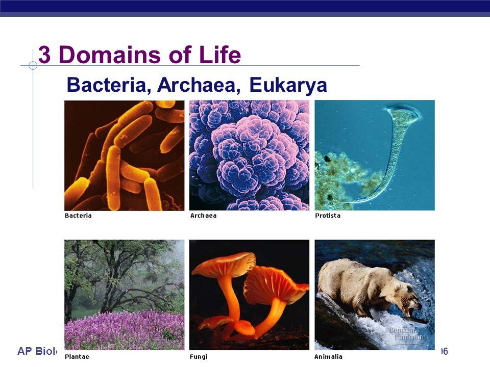 3 Domains of Life Bacteria, Archaea, Eukarya 2005-2006