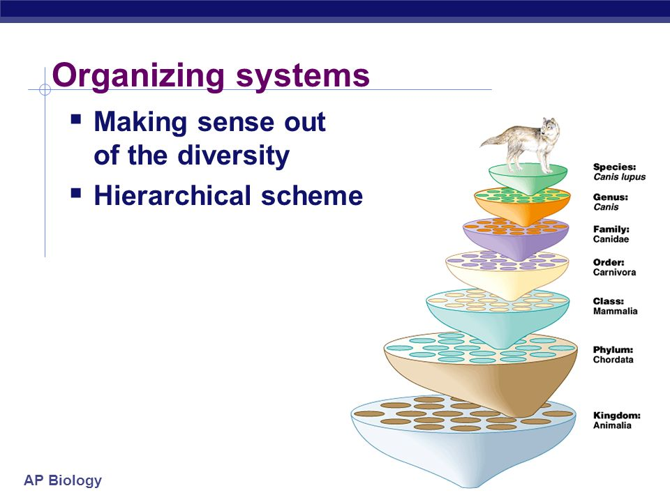 Organizing systems Making sense out of the diversity