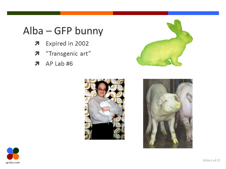 Alba – GFP bunny Expired in 2002 Transgenic art AP Lab #6
