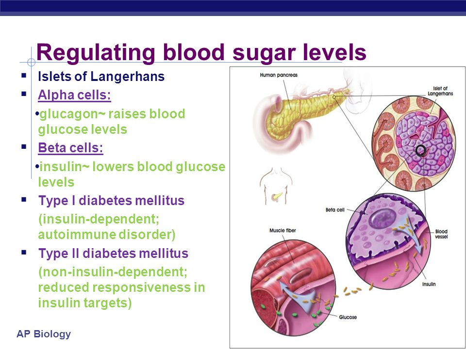 Regulating blood sugar levels