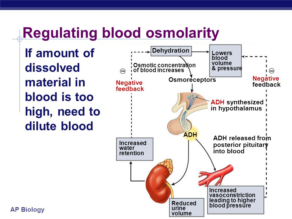 Regulating blood osmolarity