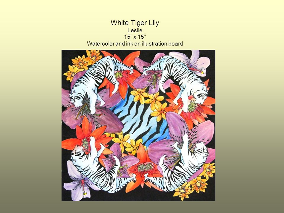 White Tiger Lily Leslie 15 x 15 Watercolor and ink on illustration board