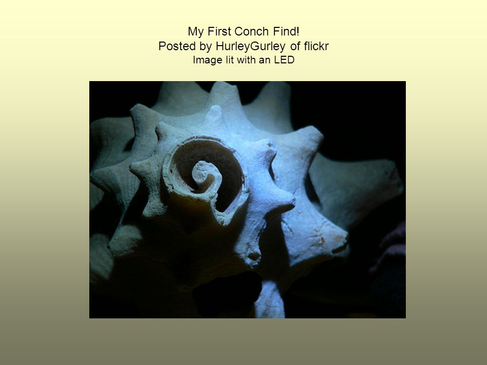 My First Conch Find! Posted by HurleyGurley of flickr Image lit with an LED
