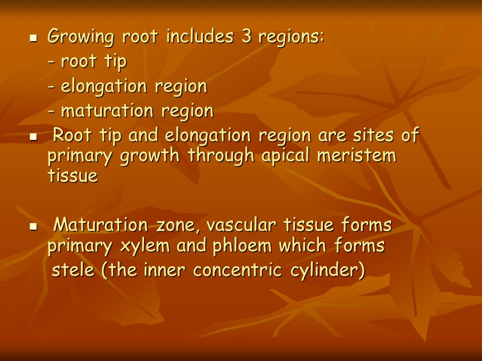 Growing root includes 3 regions: